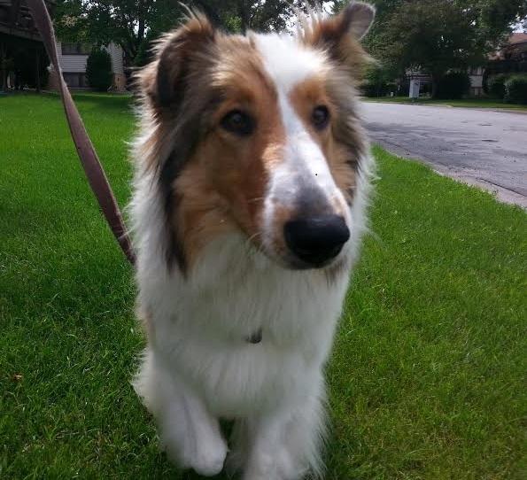 Pictures of Lassie (5/6)