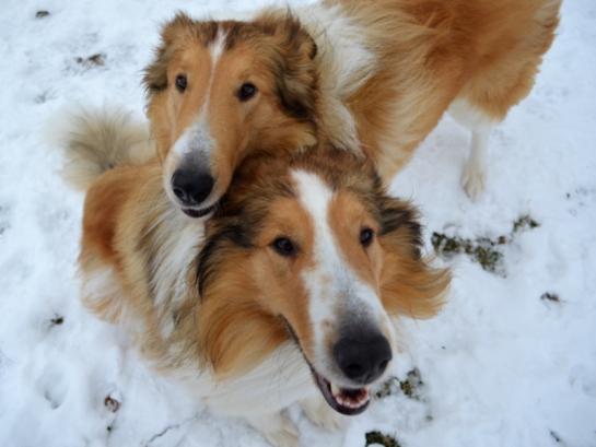 Pups_Rusty